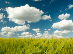 Clouds and field
